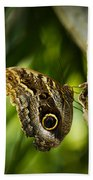 Magnificent Owl Butterfly Bath Towel