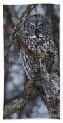 Majestic Owl Bath Towel