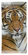 Malayan Tiger 1 Bath Towel