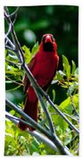 Male Cardinal Bath Towel