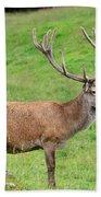 Male Deer On Field Bath Towel