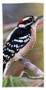 Male Downy Woodpecker Bath Towel