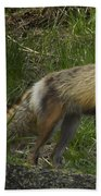 Male Fox And Pup   #3554 Bath Towel