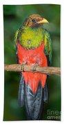 Male Golden-headed Quetzal Bath Towel