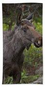 Male Moose   #5696 Bath Towel