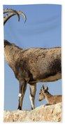 Male Nubian Ibex Bath Towel