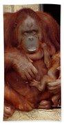 Mama N Baby Orangutan - 54 Bath Towel