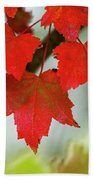 Maple Leaves Show Off Their Autumn Hues Bath Towel