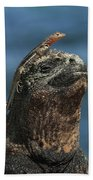 Marine Iguana And Lava Lizard Bath Towel