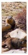 Marmots On Mount Evans Bath Towel