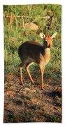 Masai Mara Dikdik Deer Hand Towel