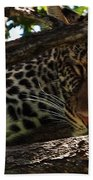 Masai Mara Leopard  Hand Towel