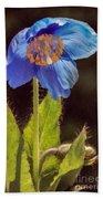Meconopsis Himalayan Blue Poppy Bath Towel