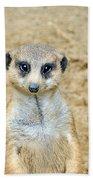 Meerkat Bath Towel