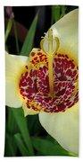 Mexican Shell Flower Bath Towel