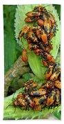 Milkweed Bug Nymphs - Oncopeltus Fasciatus Bath Towel