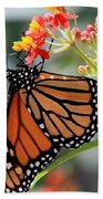Monarch Bath Towel