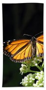 Monarch Butterfly 61 Bath Towel
