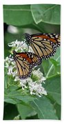 Monarch Butterfly 70 Bath Towel