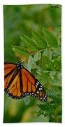 Monarch Bath Towel