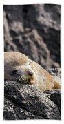Montague Island Seal Bath Towel