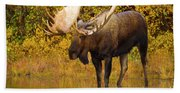 Moose In Glacial Kettle Pond  Bath Towel