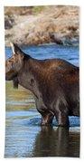 Moose On The  Gros Ventre River Bath Towel