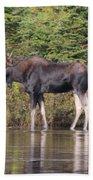 Moose_0596 Bath Towel