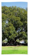 Moreton Fig Tree In Santa Barbara Bath Towel