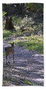 Morning Deer Bath Towel