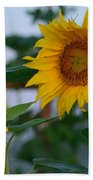 Morning Field Of Sunflowers Bath Towel
