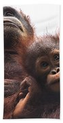 Mother And Baby Orangutan Borneo Bath Towel