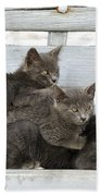 Cat And Kittens Bath Towel