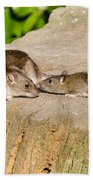 Mother Rat With Youngster Bath Towel