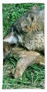 Mother Wolf Nuzzles Cubs Bath Towel