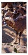 Mouflon Bath Towel