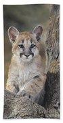 Mountain Lion Cub Bath Towel