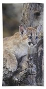 Mountain Lion Cub On Tree Branch Bath Towel