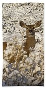 Mule Deer   #0061 Hand Towel