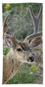 Mule Deer Buck In Velvet Bath Towel