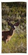 Mule Deer In Velvet   #2114 Bath Towel