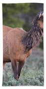 Munching Elk Grand Teton National Park Bath Towel