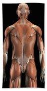 Muscles Of The Upper Body Rear Bath Towel