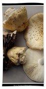 Mushrooms With Watercolor Effect 5 Bath Towel