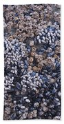 Mussels And Barnacles, Low Tide Bath Towel