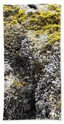 Mussels Barnacles Seaweed Closeup Bath Towel