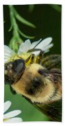Nectar Collecting Drone Fly  Bath Towel