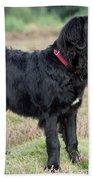 Newfoundland Dog, Standing In Field Bath Towel