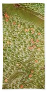 Nezara Viridula 201 Bath Towel