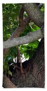 Nispero Tree Bath Towel